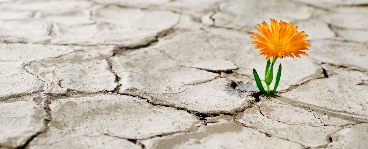 The Power of Vulnerability in Transforming Your Life